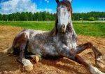חוות סוסים בשרון
